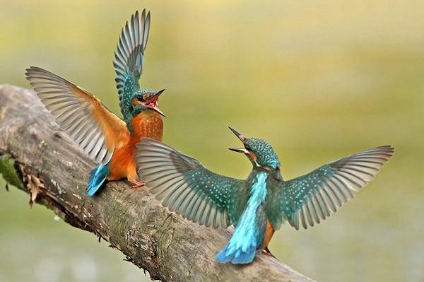Türkiye'de kuş fotoğrafçılığı nerelerde yapılır