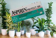 çiçek ve bitki bakımında aspirin kullanımı