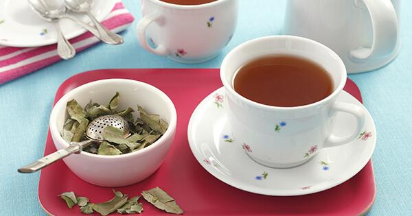 Okaliptüs Çayı