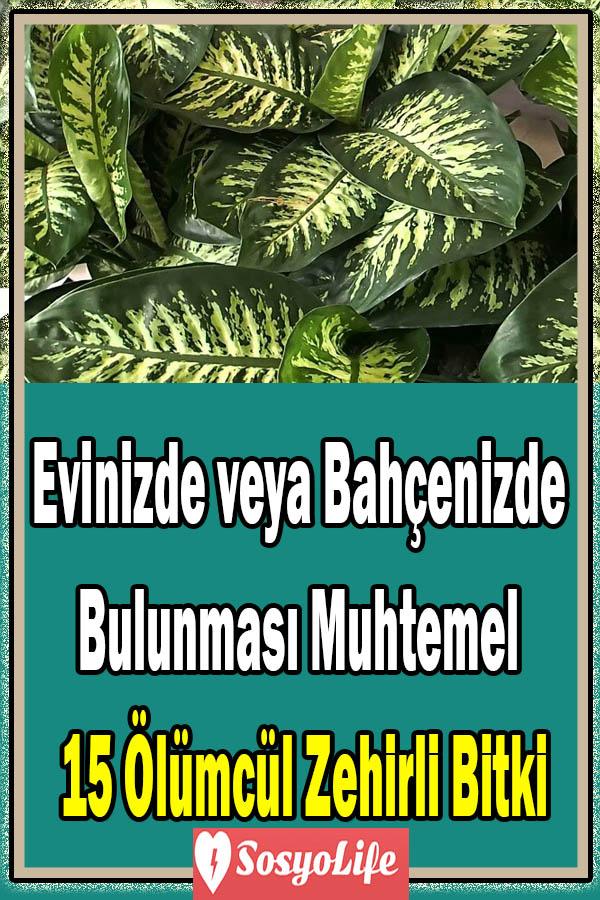 zehirli bitki türleri