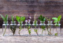 topraksız yetişebilen bitkiler