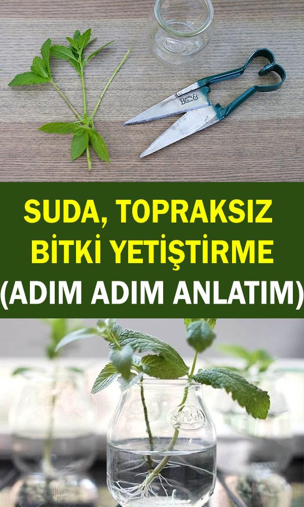 Topraksız bitki yetiştirme nasıl yapılır