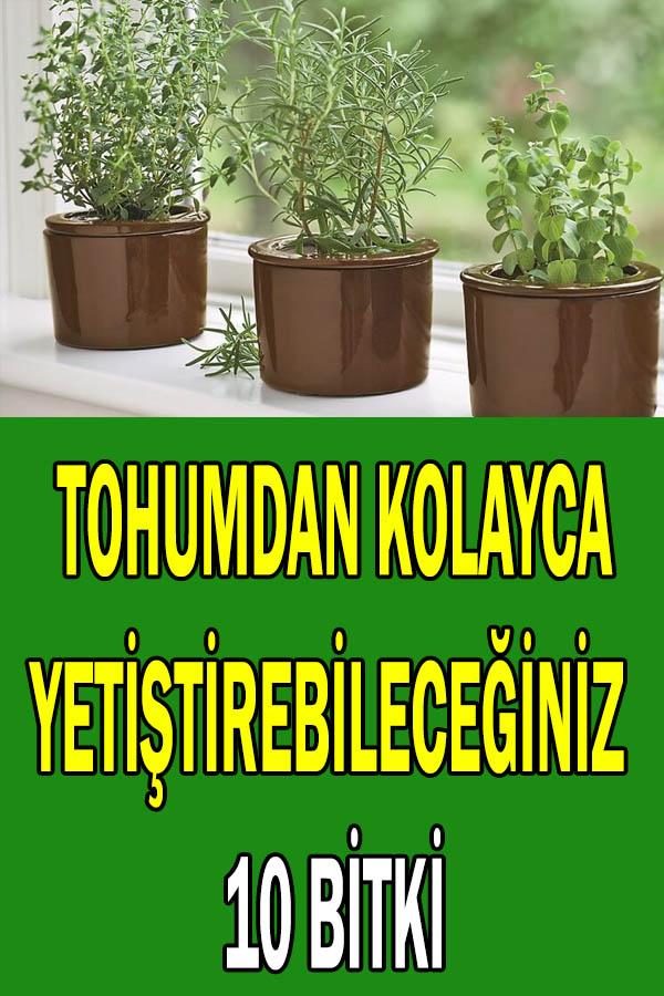 Tohumdan kolay yetişen bitkiler