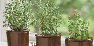 evde kolay yetişen bitkiler