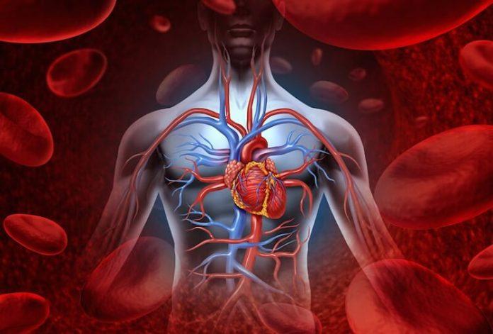 kan dolaşımını hızlandırmanın yolları