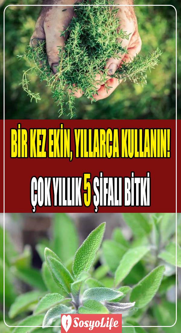 çok yıllık şifalı bitkiler