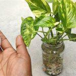 Bitkileri ve Çiçekleri Coşturan Yumurta Kabuğu Suyu Tarifi