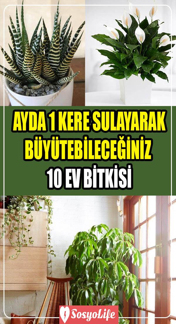 az sulanan ev bitkileri ve çiçekleri