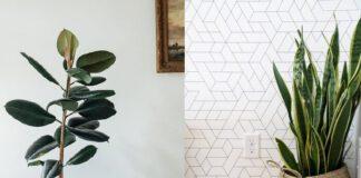 evin havasını temizleyen dekoratif iç mekan bitkileri