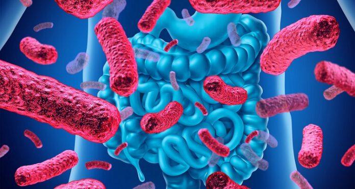 yararlı bakteriler isimleri ve faydaları