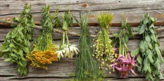 bahçede yetişen şifalı bitkiler