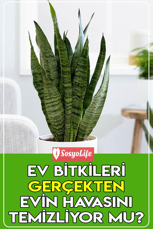 bitkiler evin havasını temizler mi